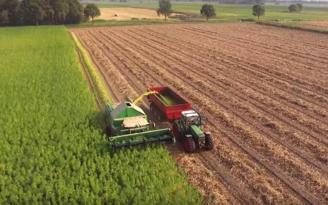 Hennep oogsten met een aangepaste combine – AgriTraderTV #58