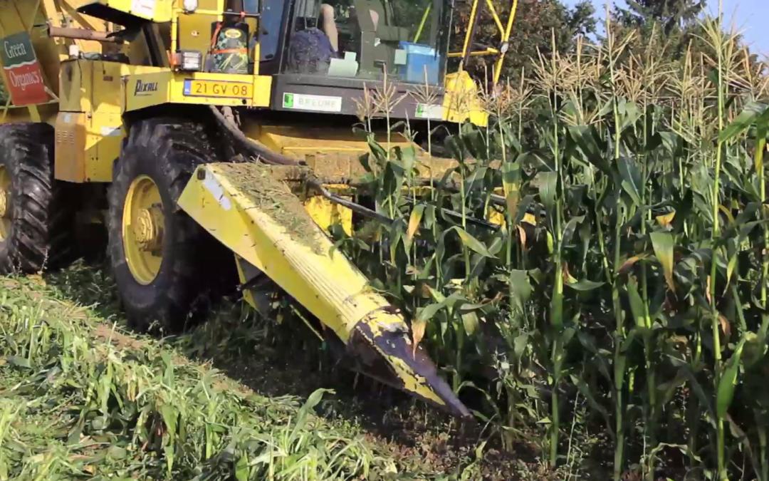 Suikermaïs oogsten met een Amerikaanse Pixall – AgriTraderTV #57